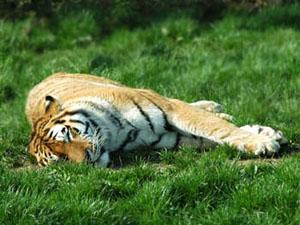 Сон у животных: Рис.2
