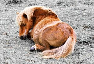Сон у животных: Рис.3