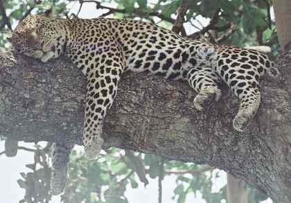 Сон у животных: Рис.5