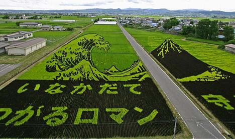 Произведения искусства из риса: Рис.1