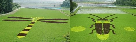 Произведения искусства из риса: Рис.7