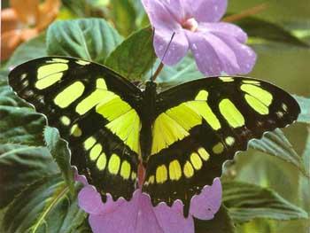 Бабочки: Рис.8