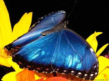 Бабочки: Рис.9