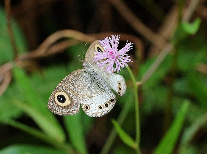 Бабочки: Рис.10