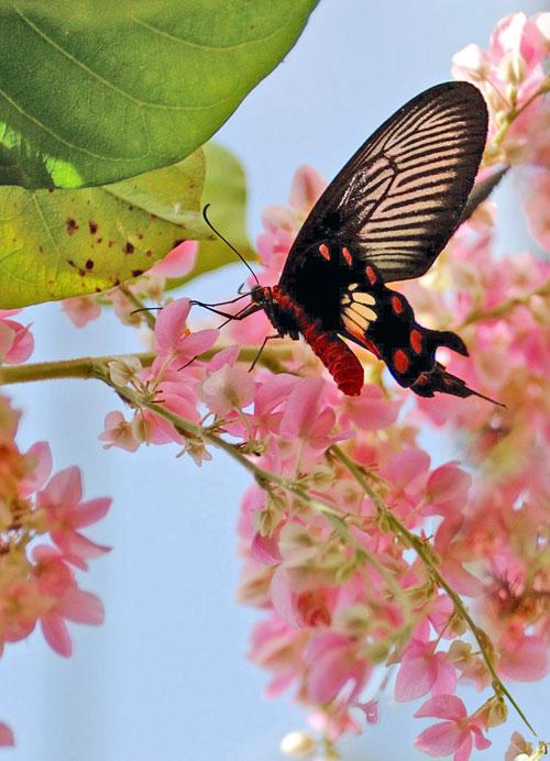Бабочки: Рис.13