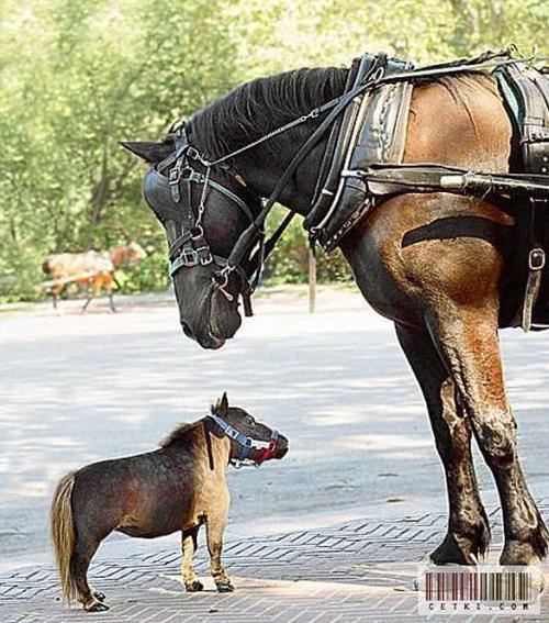Маленькая лошадка: Рис.1