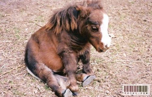 Маленькая лошадка: Рис.2