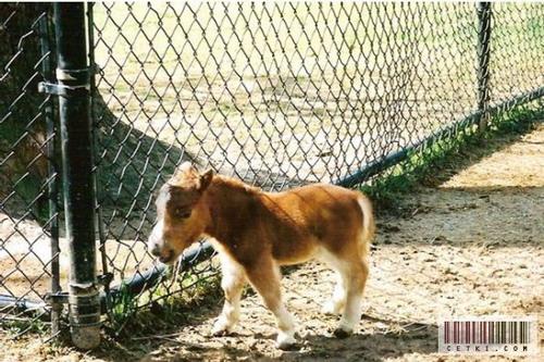 Маленькая лошадка: Рис.3