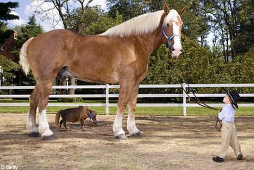 Маленькая лошадка: Рис.4