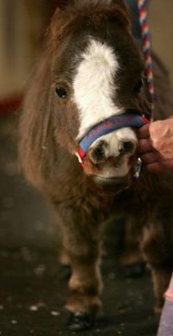 Маленькая лошадка: Рис.6