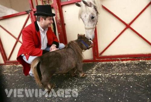 Маленькая лошадка: Рис.8