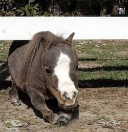 Маленькая лошадка: Рис.10
