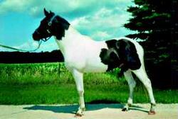 Маленькая лошадка: Рис.11