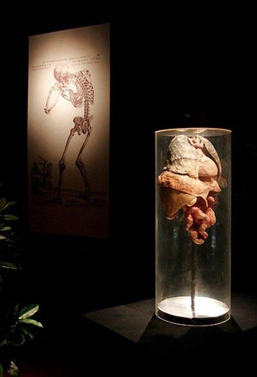 Выставка живых мертвецов: Рис.5