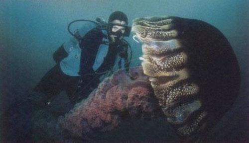 Гигантские медузы: Рис.3