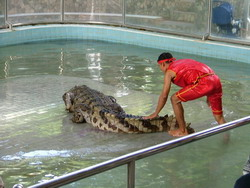 Шоу крокодилов: Рис.4