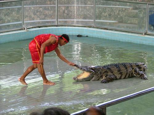 Шоу крокодилов: Рис.5