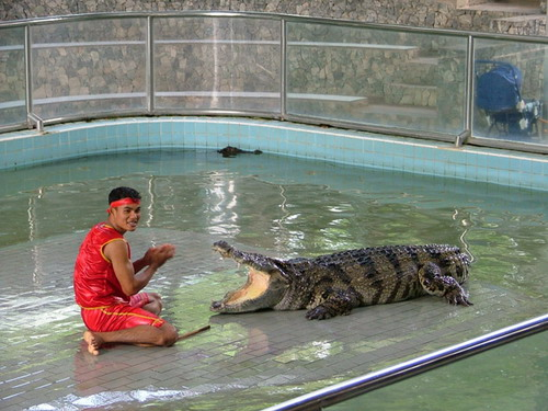 Шоу крокодилов: Рис.6