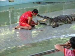 Шоу крокодилов: Рис.7