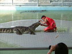 Шоу крокодилов: Рис.8