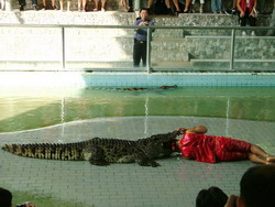 Шоу крокодилов: Рис.10