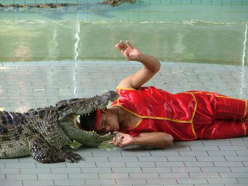 Шоу крокодилов: Рис.11