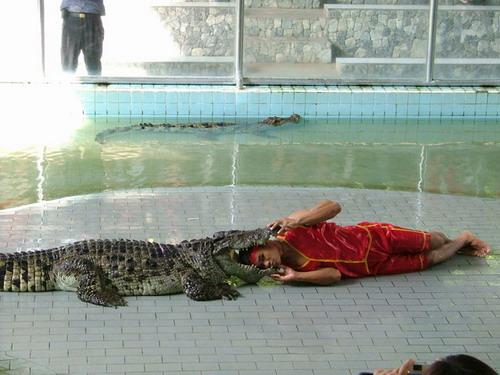 Шоу крокодилов: Рис.12