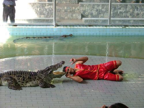 Шоу крокодилов: Рис.13