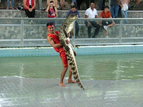 Шоу крокодилов: Рис.14