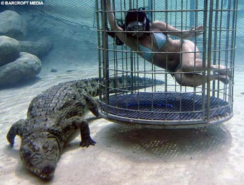 Шоу крокодилов: Рис.15