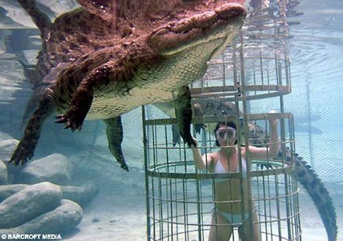 Шоу крокодилов: Рис.16