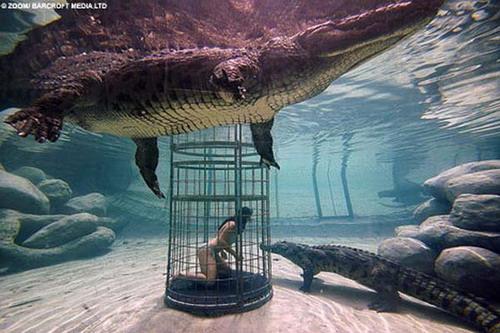 Шоу крокодилов: Рис.18