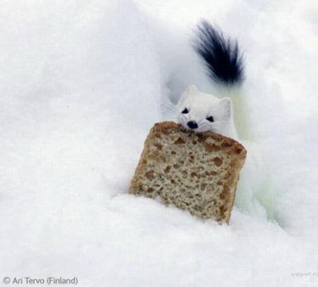 Лучшие фотографии дикой природы: Рис.1