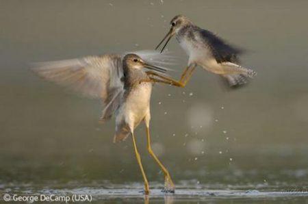 Лучшие фотографии дикой природы: Рис.2