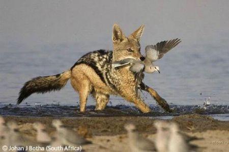 Лучшие фотографии дикой природы: Рис.4