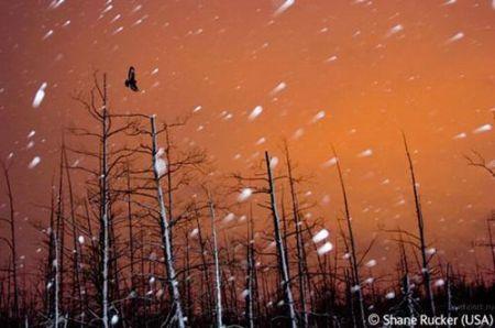 Лучшие фотографии дикой природы: Рис.5