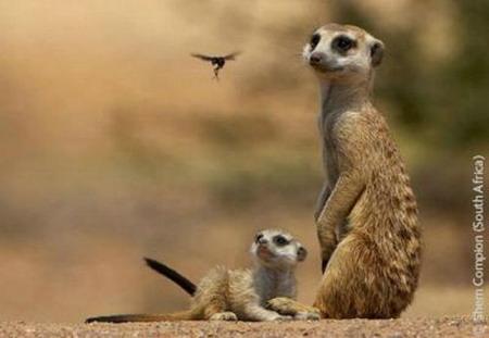 Лучшие фотографии дикой природы: Рис.19
