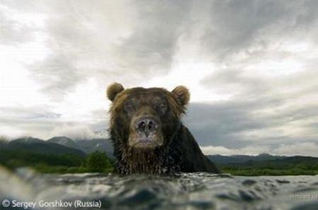 Лучшие фотографии дикой природы: Рис.20