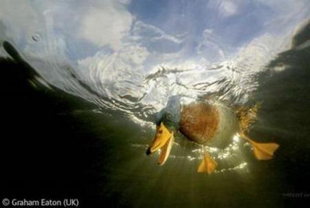 Лучшие фотографии дикой природы: Рис.22