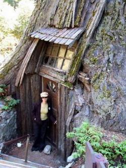 Деревья-гиганты: Рис.15
