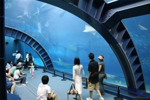 Гигантский аквариум: Рис.4