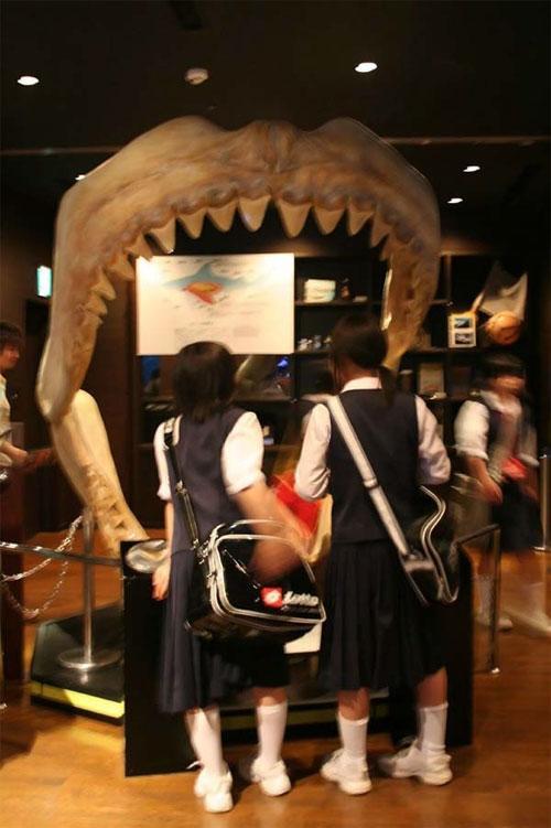 Гигантский аквариум: Рис.5