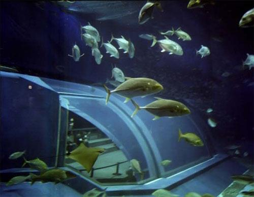 Гигантский аквариум: Рис.7