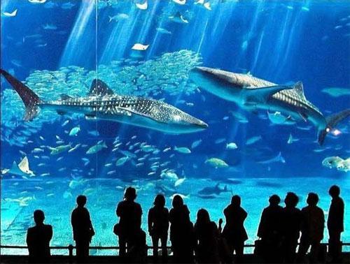 Гигантский аквариум: Рис.8