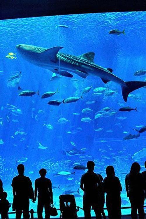 Гигантский аквариум: Рис.9