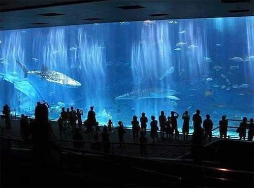 Гигантский аквариум: Рис.13
