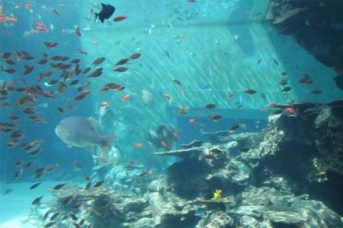 Гигантский аквариум: Рис.14