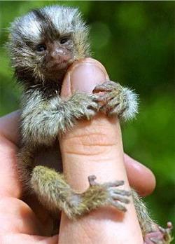 Очень маленькие на пальце: Рис.4