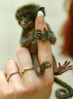 Очень маленькие на пальце: Рис.5