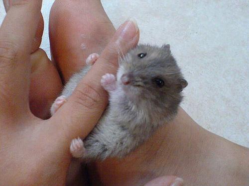 Очень маленькие на пальце: Рис.6